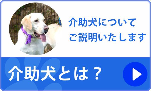 室内介助犬とは?